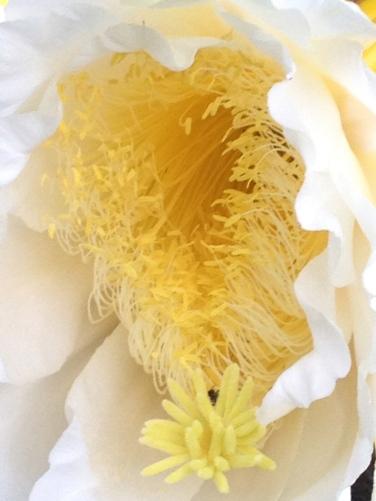 beautiful flower interior