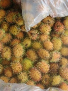 golden rambutans