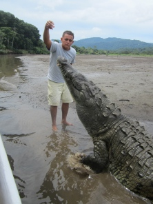 Giant crocodiles on Tarcoles River tours.